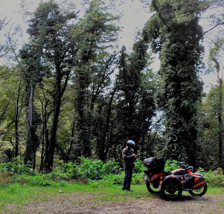 Día 11 - La costa Violeta de Calabria y el bosque de Mamola
